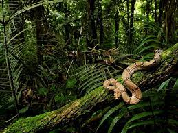 40+ Rainforest backgrounds HD ...