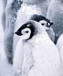 penguin love wallpaper. Interesting Love 1152x864 With Penguin Love Wallpaper 6