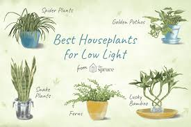 House Plants Low Light Requirements 7 Recommended Houseplants For Low Light Conditions
