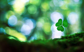 four leaf clover desktop wallpaper. Simple Four Free Download Four Leaf Clover Wallpapers HD By Billion Photos Pages On Desktop Wallpaper D