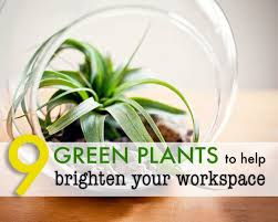 plants for office cubicle. 9 Low-maintenance Plants For The Office | Inhabitat - Green Design, Innovation, Architecture, Building Cubicle