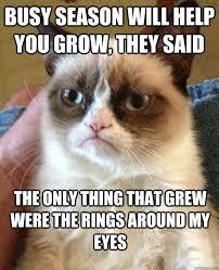 Busy Season Will Help Cat Meme - Cat Planet | Cat Planet via Relatably.com