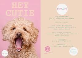 Honest Kitchen Dog Food Reviews Get Home Inteiror House Design Rh Lincoln  Gointro Io