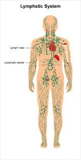 lymphedema cancer net