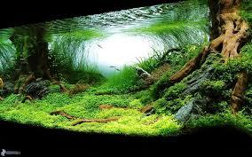 freshwater wallpaper. Plain Freshwater 1920x1200 Zaruench Zpsob Jak Ochladit Vodu Ve Vaem Akvriu  To Freshwater Wallpaper
