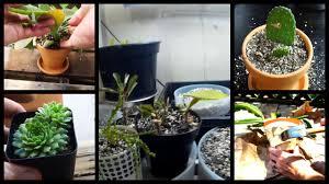 Succulent Grow Light Setup Cactus Grow Lights Update New Cactus And Succulents