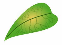 Jungle Leaves Clip Art Leaf Images Free Downloads