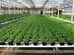 growop technology