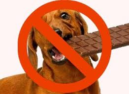 with easter recently ped many of us will harbor some leftover chocolate to snack on over the next ing months unfortunately it can be very dangerous