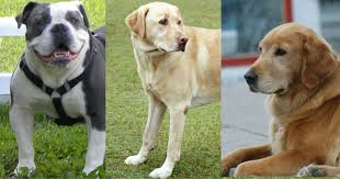 most por dog breeds