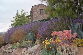 Small Picture Drought Tolerant Landscape Design Photo Gallery