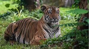 Chile: Tiger tötet 21-jährige Mitarbeiterin von Safari-Park