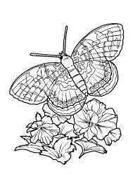 Afbeeldingsresultaat Voor Vlinders En Bloemen Kleurplaten