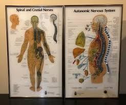 Details About Visual Odyssey Neuropatholator 2 Large Chiropractic Illuminating Light Chart