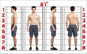 Height Chart Reference Art Reference Proportion Chart Figure Study Male Figure