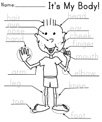 Parts of the Body   Kindergarten and Worksheets