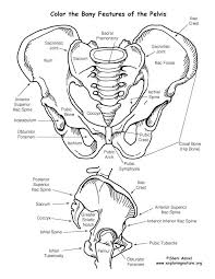 Small Picture 121 best Human Body Anatomy images on Pinterest Human body