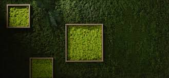 The <b>Unique Design</b> Potential of Moss Walls - Ambius