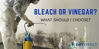 use bleach or vinegar to kill mold