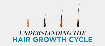 Understanding The Hair Growth Cycle Toppik Blog