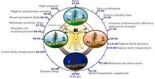 Chinese Medicine Clock Wild Earth Acupuncture Portland