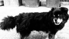 11 Beste Afbeeldingen Van Asiel Honden Filmpjes In 2013 Watches