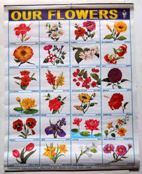 Flower Chart India Vintage School Chart Poster Print Our Flowers Chart