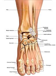 Ankle Bone Chart Left Foot Ankle Bone Left Foot Anatomy With Name Foot