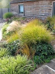 Small Picture 268 best Grasses images on Pinterest Garden ideas Gardens and