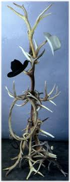 Antler Coat Racks Deer elk moose Antler Chair Antler Lamps Chandeliers Light 64