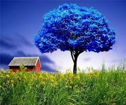 Image result for beautiful image of trees