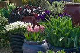 container gardening for beginners. Spring Containers Container Gardening For Beginners