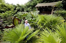 Small Picture Suffolk villager Andrew Brogan transforms garden into a tropical