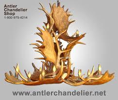 real antler moose elk cascade chandelier moselkcasc