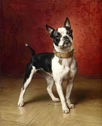 a french bulldog carl reichert oil painting