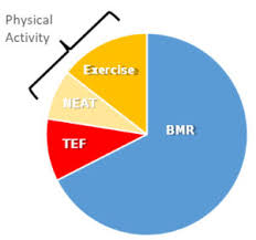 Exercise Expenditure Chart Tdee Calculator Best Tdee Calculator Calculate Your Total