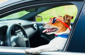 dog driving a car just kidding