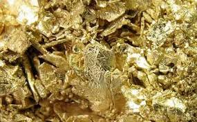 Image result for gold field photos
