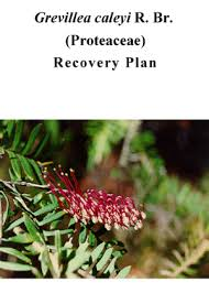Recovery Plan Delectable Grevillea Caleyi R Br Proteaceae Recovery Plan NSW Environment