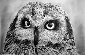 realistic animals to draw. Unique Realistic 40 Beautiful Animal Sketches 5 And Realistic Animals To Draw D
