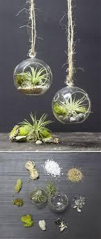 DIY MINI HANGING AIR PLANT TERRARIUM :: Find 3