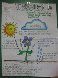 Staar Review Anchor Chart For 5th Grade Science Something
