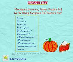 10 Steps Of Glycolysis Rome Fontanacountryinn Com