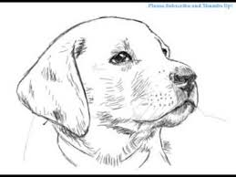 lab dog drawing easy. Modren Dog How To Draw A Handsome Labrador Dog  YZArts With Lab Drawing Easy R