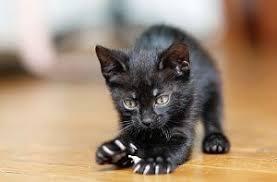 курсовая по оперативной хирургии кастрация кота Кот и Кошка Курсовая по хирургии