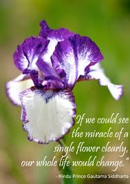 Purple Flower Quotes Quote Of The Day The Style Laboratory Eventful Ramblings