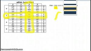 Dna Sequence Chart Reading A Codon Chart