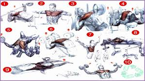 Chest Chart Gym Chest Workout Chart Hd Images Sport1stfuture Org