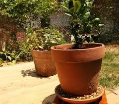 backyard gardening. Organic Fruit, Gardening, Backyard Container Sustainable Food, Gardening