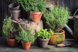 what is the best mix of herbs to grow together in a pot